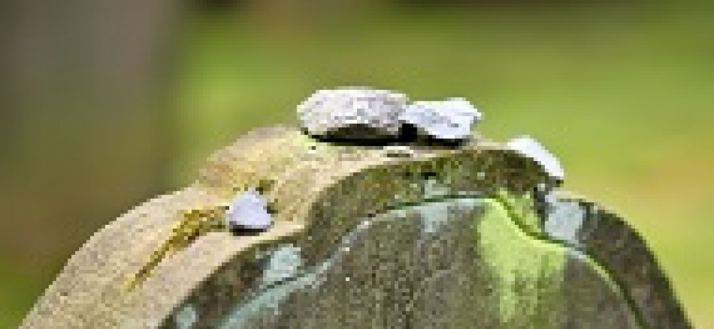 headstone with small stones on top