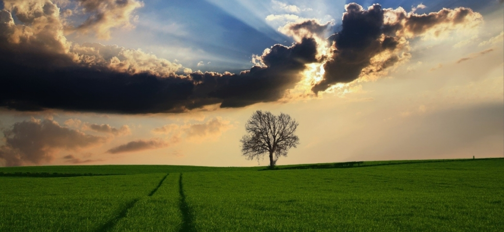 A tree in the distance of a green field with rays of light emerging from the clouds