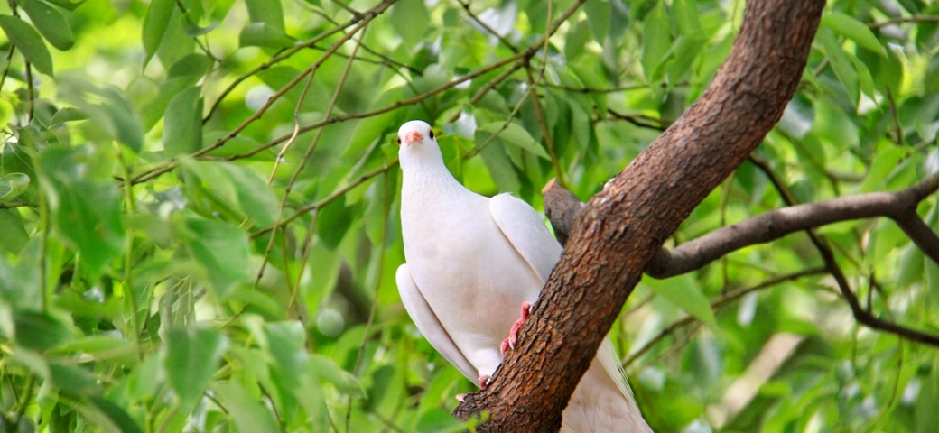 a dove sits on a tree branch with a background of leaves