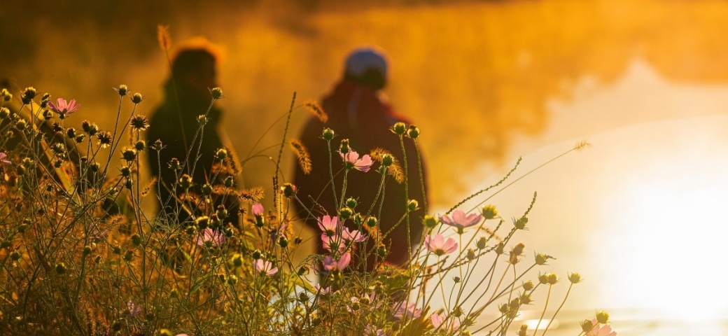 closeup of sunlit field of purple flowers. in the background are two people shown from behind who appear to be in conversation or contemplation side by side