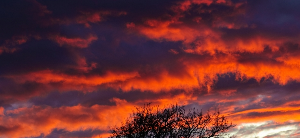 A blue and red sky is the backdrop of a lone bush. Photo by Frank Busch on Unsplash