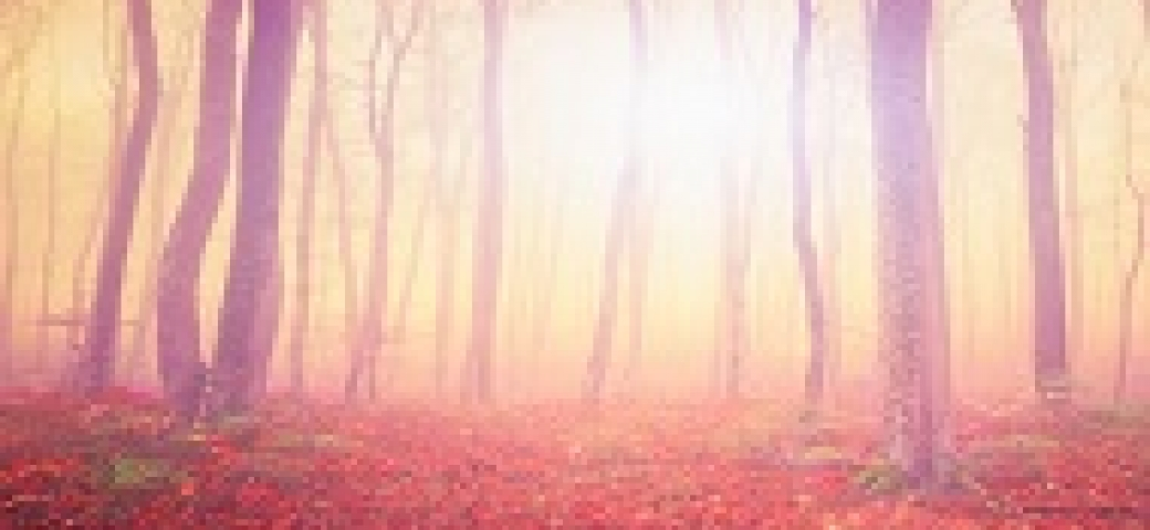 pink and orange light coming through small trees in the forest