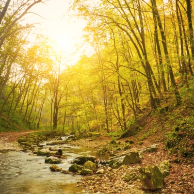 A forest filles with trees whose leaves have started to turn colors and fall. The sun is shining through the branches and running through the middle is a stream