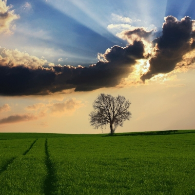green field with two lines marking a path in the grass leading toward a bare tree and blue sky with sunlight shining behind clouds