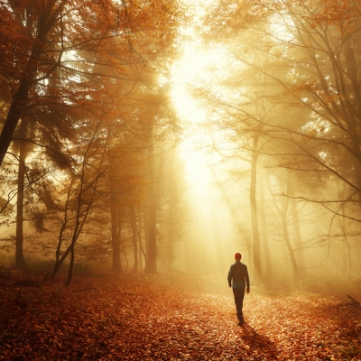person walking in forest with sunlight streaming down