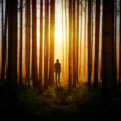 person in silhouette standing in dark forest between tall thin trees with light streaming through