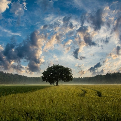 tree in a green field under sky full of clouds