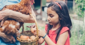 person holding a chicken with basket of eggs and little girl taking egg out of basket