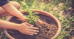 person planting young tree in pot