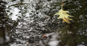 leaf on ripples of water