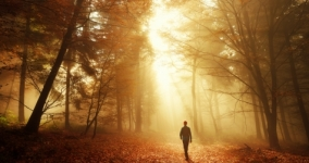 person walking through sunlit forest